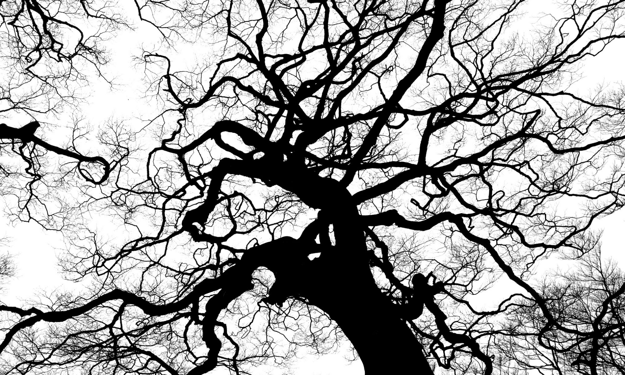 The branches of a tree against the sky.